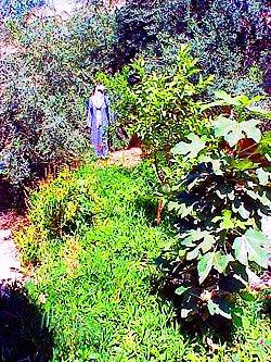 Jordan house garden