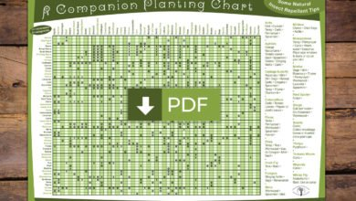 Photo of Companion Planting Guide