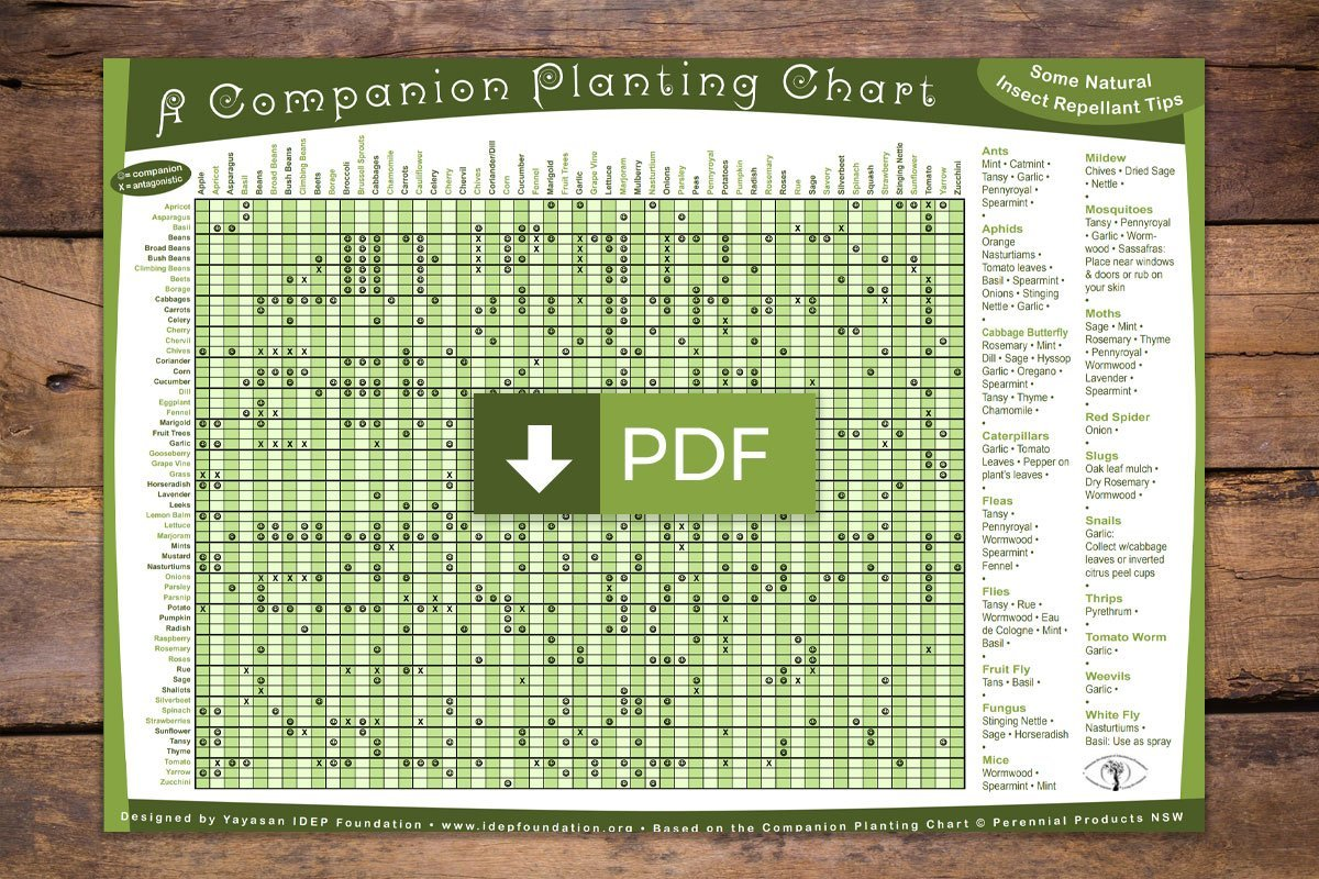 photo about Printable Seed Starting Chart identify The Permaculture Review Insute