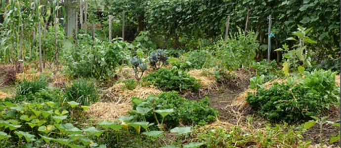 How to establish a small space intensive food garden the for Small permaculture garden designs