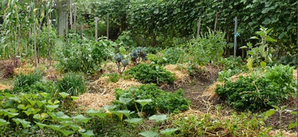 The Permaculture Research Insute on modern garden design, veggie garden design, herb garden design, landscape design, companion planting garden design, high tunnel garden design, vegetable garden design, horticultural therapy garden design, water garden design, simple house garden design, forest garden design, bioretention garden design, swale garden design, bioshelter design, livestock garden design, xeriscape garden design, home garden design, keyhole garden design, cutting flowers garden design, sustainable garden design,