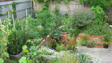 Photo of Lessons from an Urban Back Yard Food Forest Experiment
