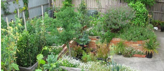 Lessons from an Urban Back Yard Food Forest Experiment The