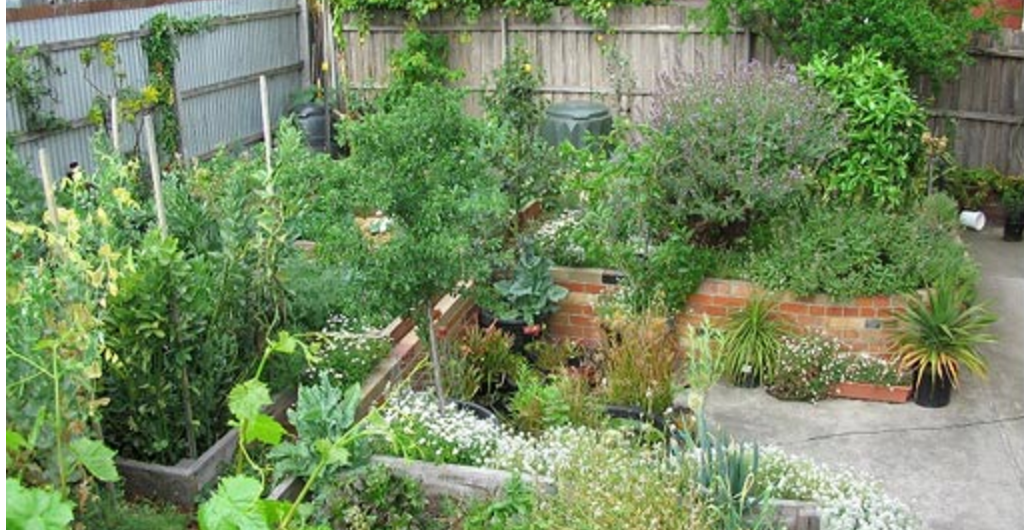 images?q=tbn:ANd9GcQh_l3eQ5xwiPy07kGEXjmjgmBKBRB7H2mRxCGhv1tFWg5c_mWT Awesome Gardening Permaculture @house2homegoods.net
