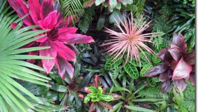 Photo of Start at Your Doorstep – John and Laura's Shade-Garden Makeover, Inner Urban Sydney