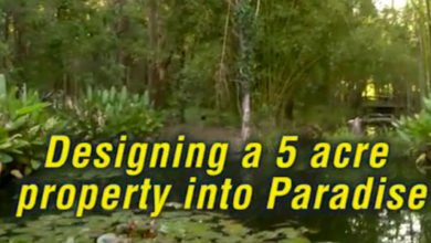 """Photo of Free Permaculture Videos: """"5 Acre Abundance on a Budget"""" is LIVE!"""