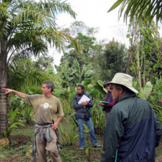 """Writing """"Toolkit for Climate Stabilization with Tree Crops"""" (Kickstarter Campaign)"""