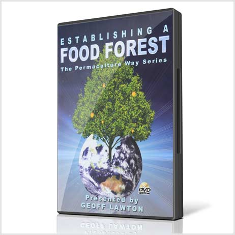 Establishing-a-food-forest
