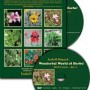 Wonderful World of Herbs! DVD