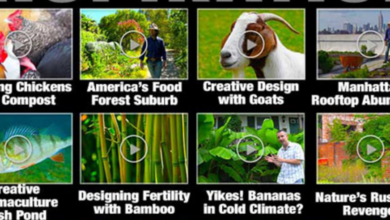 Photo of Need Some Permaculture Inspiration? Watch More Free Geoff Lawton Videos!