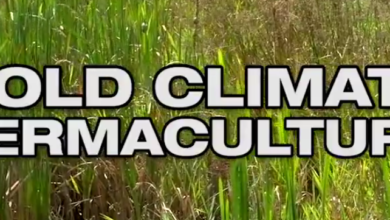 Photo of Cold Climate Permaculture Video