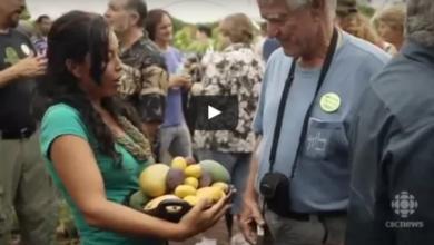 Photo of The Fruit Hunters (video)