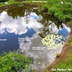 Perfect-fish-pond