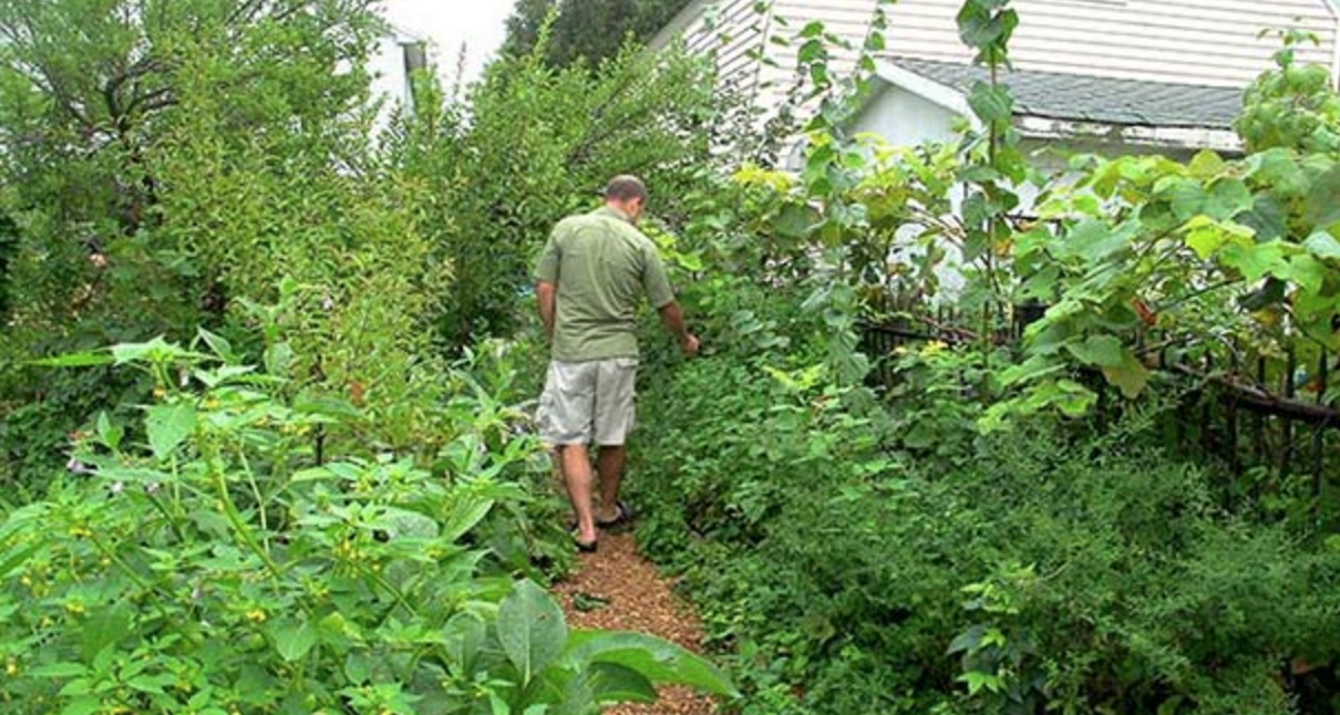 Perennial Abundance Over 200 Food Plants On Just A Tiny
