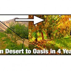 From-Desert-To-Oasis-in-4-Years