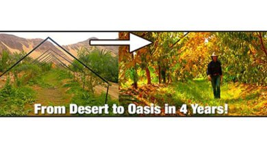 Photo of From Desert to Oasis in 4 Years (Jordan)