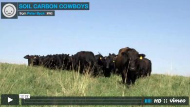Photo of Soil Carbon Cowboys – Case Studies in Holistic Management (video)