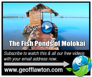 The Fish Ponds of Molokai