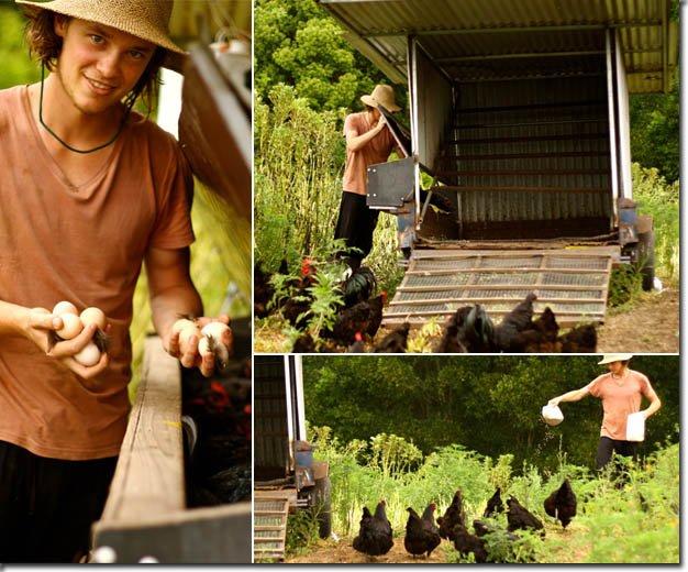 Chicken Systems of Zaytuna Farm