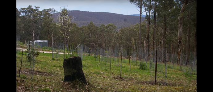 Photo of 500 Days of Food Forest
