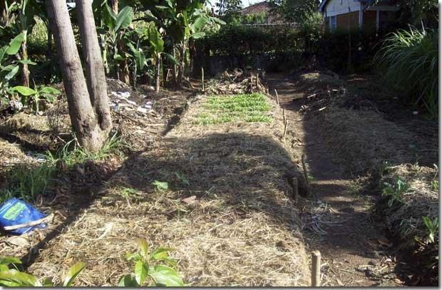 Dig-Garden-plot