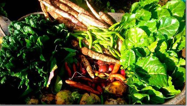 Food-abundance