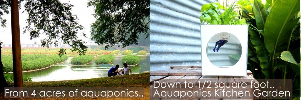 Aquaponics scale 4 acres to 1 sq foot Kitchen Garden v3