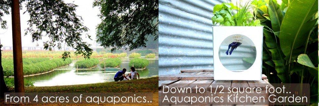 Aquaponics scale 4 acres to 1 sq foot Kitchen Garden v3