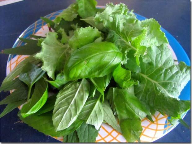Salad-leaves