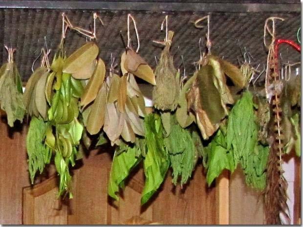 Tea-leaves-drying