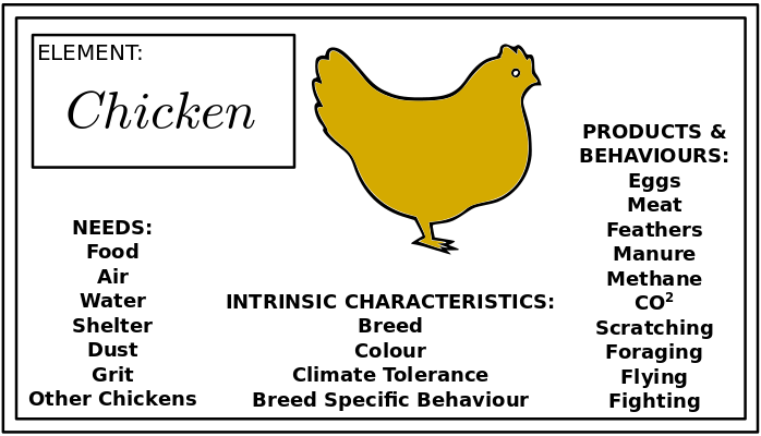 permaculture_chickenby dt