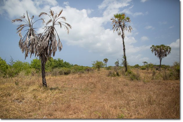 3-Deforestation