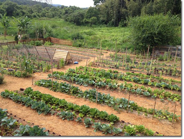 Therapeutic-Permaculture-9