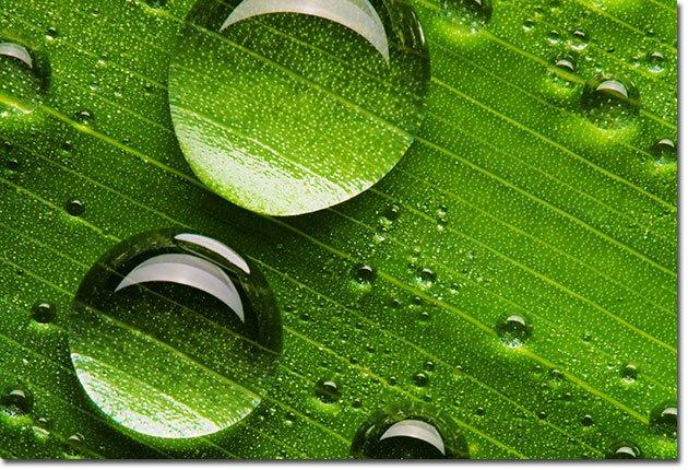 Water-Bead-on-Leaf