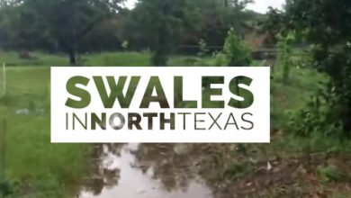 Photo of Swales in North Texas Take on 2.5 inches of Rain and Perform Perfectly