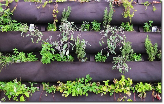 Vertical-Gardening-(courtesy-of-Ruth-Hartnup)