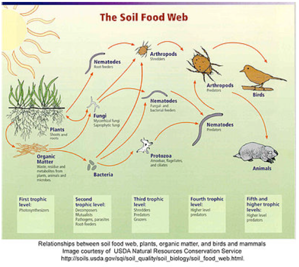 soilfood2