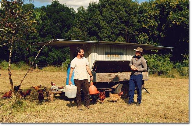 James-Ryan-Chickens