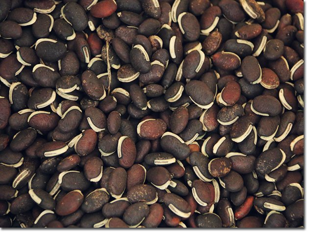 the value and significance of saving seeds and how it benefits you