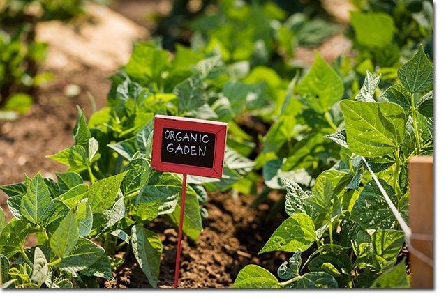 3 super quick do it yourself recipes for the urban home gardener garden michael solutioingenieria Choice Image