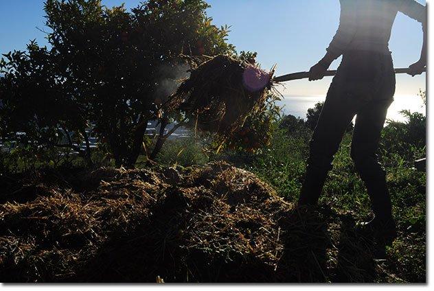 Hot-(steaming)-compost.-Photo-by-David-Ashwanden