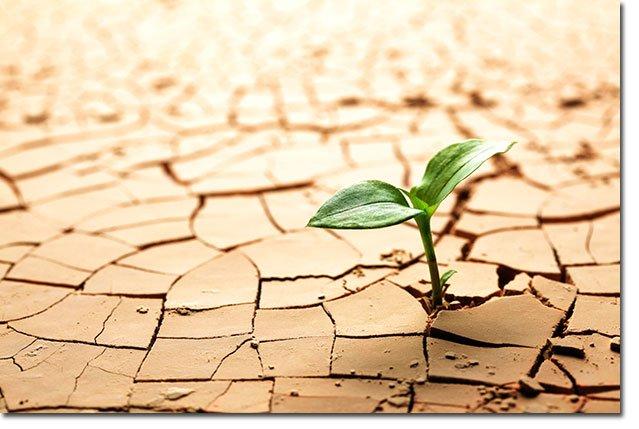 Soil-Plant
