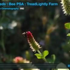 Bee-PSA