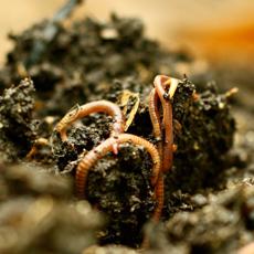 Soils-Thumb