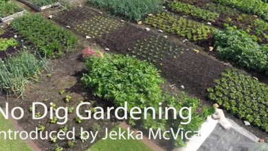 Photo of Living With The Land Part 5 – No-Dig Gardening