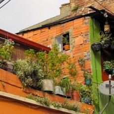 Home Garden in Bogota