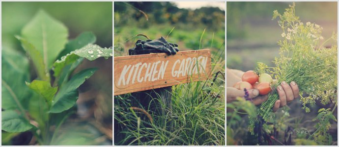 Kitchen_garden