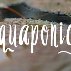 Aquaponics01