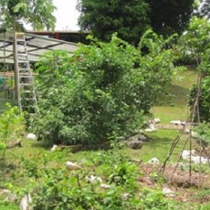 Front Yard Food Forest in Our Panama Project