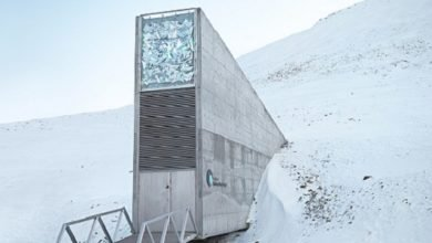 Photo of Syrian War Compels To Open The Doomsday Seed Vault For First Withdrawal